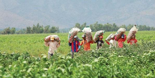 Futuro del agro en Colombia